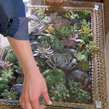 coffee table terrarium garden club