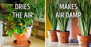 plants at home plants that create the perfect microclimate at home