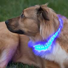 Light Up Dog Collar Light Up Your Pet With Glowby Collar Bandz Super Bright Led Strips