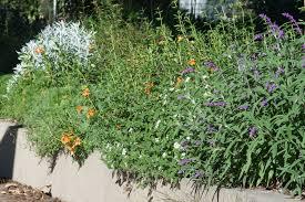 native plant gardens native plant garden tour weeding wild suburbia
