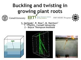 Most Difficult Plants To Grow Earth U0027s Internet U0026 Natural Networking Plant Root Spiraling