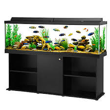 Fluval 125 Cabinet Aqueon 125 Gallon Aquarium Ensemble Fish Aquariums Petsmart