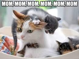 Kittens Memes - mom mom mom mom kittens memes and comics