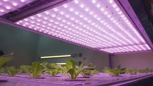 what is the best lighting for growing indoor best grow lights for your indoor plants indoor gardening