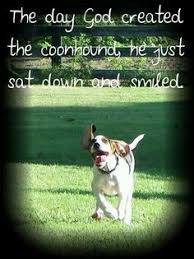 bluetick coonhound fun facts labrador retriever intelligent and fun loving bluetick