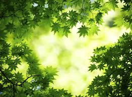 high res green tree wallpapers 545408 zalman zafra tue 7 jul 2015