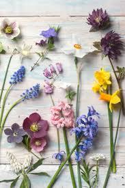 botanical photography spring flowers fine art photograph