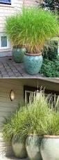 best 25 bamboo grass ideas on pinterest bamboo in pots