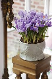 potted flowers think colorful affordable potted flowers for your by
