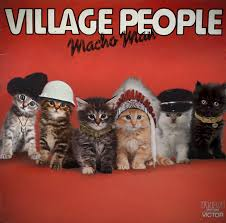 cat photo album top 10 album covers featuring cats petful