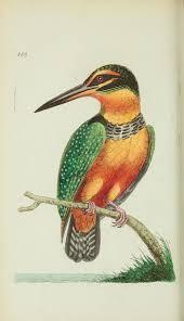 28 best birds images on pinterest bird art bird illustration