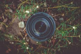 Gray Green by Black Dslr Camera Lens In Green Leaf Plant Free Stock Photo