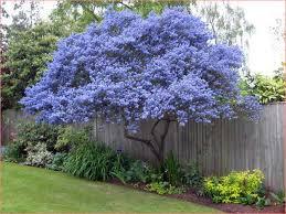 small trees for gardens cori matt garden