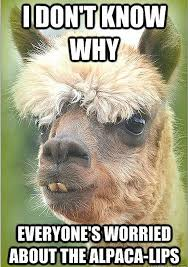 Alpaca Meme - 10 alpacalypse memes to make you very nervous