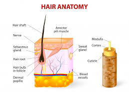 Average Hair Loss Per Day How Fast Does Hair Actually Grow Science Abc