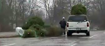 tuesday is final day to dispose of live christmas trees in
