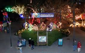 Lights At The Zoo by Lights At The Zoo A Hit U2013 Esomethin Com Perrysburg High