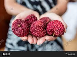 lychee fruit lychee fruit closeup woman hands image u0026 photo bigstock