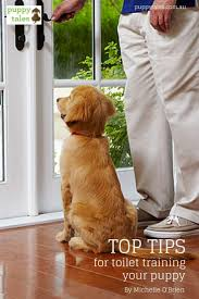 best 25 puppy toilet training ideas on pinterest dog behavior
