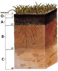 soil wikipedia