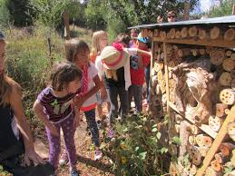programs natural resources native plant communities new mexico summer camp at the randall davey audubon center u0026 sanctuary