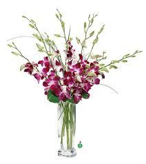 dendrobium orchids dendrobium orchids in alamo ca alamo flower co