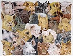 pig drawings fine art america