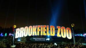 brookfield zoo winter lights bright lights magical nights brookfield zoo holiday magic