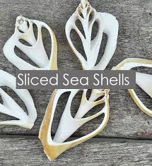 Where To Buy Seashells Simply Shells Shells And Starfish From Responsible Resources