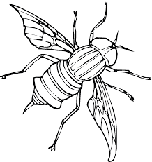 fly coloring pages getcoloringpages com