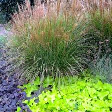 patio outdoor lovely ornamental grasses for your outdoor