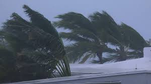 hurricane nears palm trees blowing in the wind stock footage