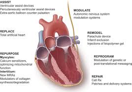 Anatomy Of The Heart And Its Functions The Future Of Heart Failure Diagnosis Therapy And Management