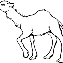 coloring page for camel kids drawing and coloring pages marisa