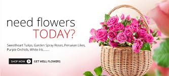 Get Flowers Delivered Today - rainbow florist