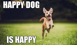 Happy Dog Meme - happy dog imgflip