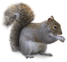 types of squirrels squirrel facts for kids dk find out