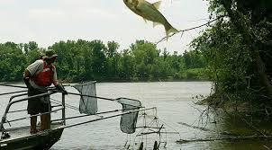 Water Challenge Asian Controlling Asian Carp Remains A Challenge Medill Reports Chicago