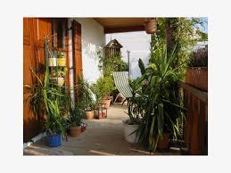 palme f r balkon balkon palme 56 images palme für balkon carprola for umtopfen
