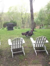 Backyard Turkeys Turning A Wasteland Into An Oasis Hometalk