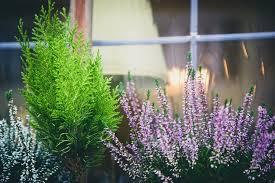 Plants For Winter Window Boxes - february 2017 u2013 regarding gardening