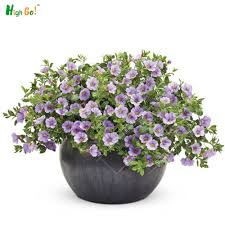 compare prices on vine plants indoor online shopping buy low