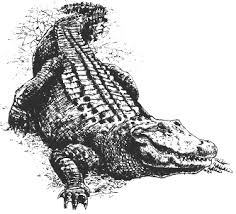 sofia poster thermoregulation of the american alligator in the