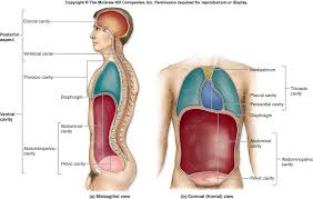 What Is Anatomy And Physiology Class Anatomical Orientaion Sites For Human Anatomy U0026 Physiology Class