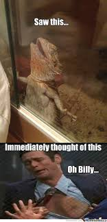 Lizard Toast Meme - iguana memes best collection of funny iguana pictures