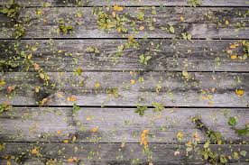 wooden leaves wall free photo leaves wooden boards wood wall free image on