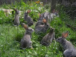 rabbit garden rabbits in a vegetable garden rabbit repellents