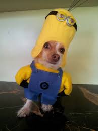 cute dog halloween costumes 60 horribly hilarious halloween costumes for cute pets