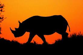 sle resume journalist position in kzn wildlife ezemvelo accommodation the home of rhino conservation