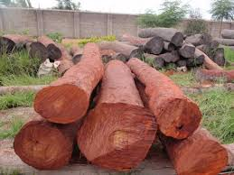 wood in sandal wood in chennai tamil nadu india prince export house